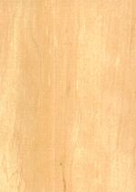 Erle Holzmuster Eigenschaften Anwendungsgebiete Hersteller