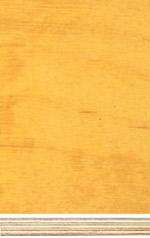Birch plywood, phenolic film finish